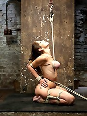 Welcome back Felony for another round of HogTied sexual torment and intense bondage. In scene one, Felony is precariously perched in a kneeling position with her elbows tied tight against her back and breasts up to the pulley. Claire beats her breasts and squeezes out intense orgasms from Felony. In scene two, she is bound pile driver style. She cums so hard she squirts all over her face and tits like a rain storm. In scene three, she is suspended in an intense back arch crucifixion suspension with her feet almost touching her shoulders. In the final scene, she is bound spread eagle and rides the sybian for dear life. Watching her orgasm is intense. Her body involuntarily contracts, drool shines her breasts, she speaks in a language unknown to us, forgetting everything and just cumming
