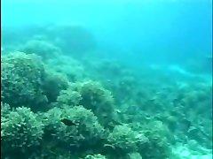 Aqua Fuck-fest 2 (Part 1 of 2)