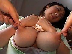 كومي تاتشيبانا الرضاعة