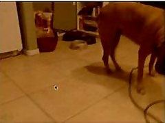 Big Fat Ass Rdečelaska Solo na webcam - Več videov na WebCam666.ML