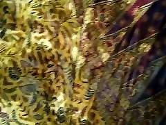 urīna izplatīties uz mātes sarong