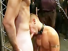 Leashed gay sucks dicks to doms in public