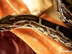 Golden Desi North mikespike styria austria Paki Beauty plays with a South mallusex vids Black Python