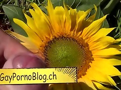 young gay jerks off on the sunflower